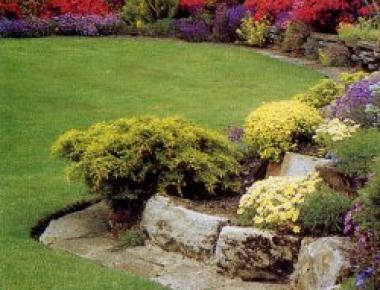 Piante ornamentali da giardino